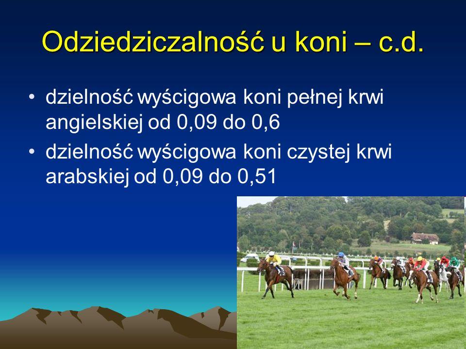 Odziedziczalność u koni – c.d.