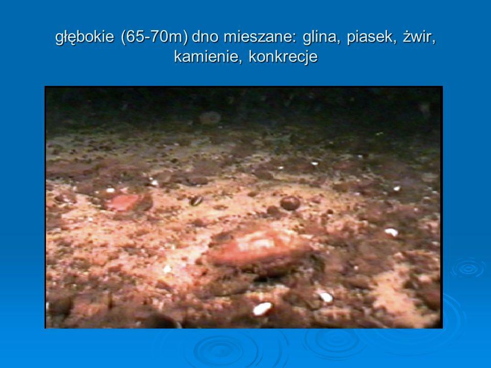 głębokie (65-70m) dno mieszane: glina, piasek, żwir, kamienie, konkrecje