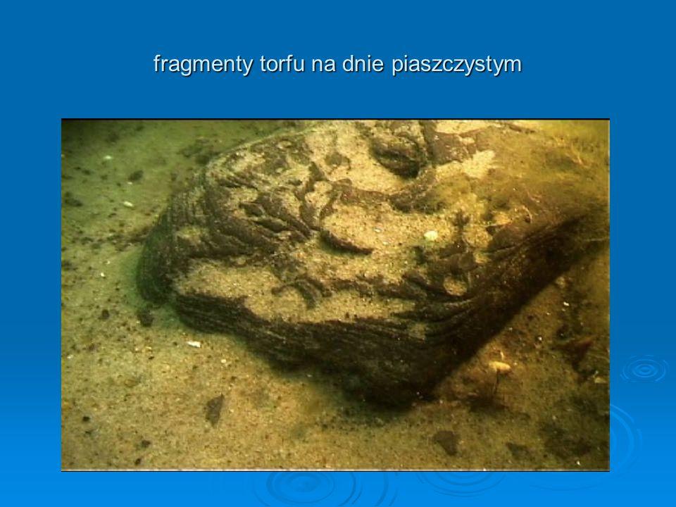 fragmenty torfu na dnie piaszczystym