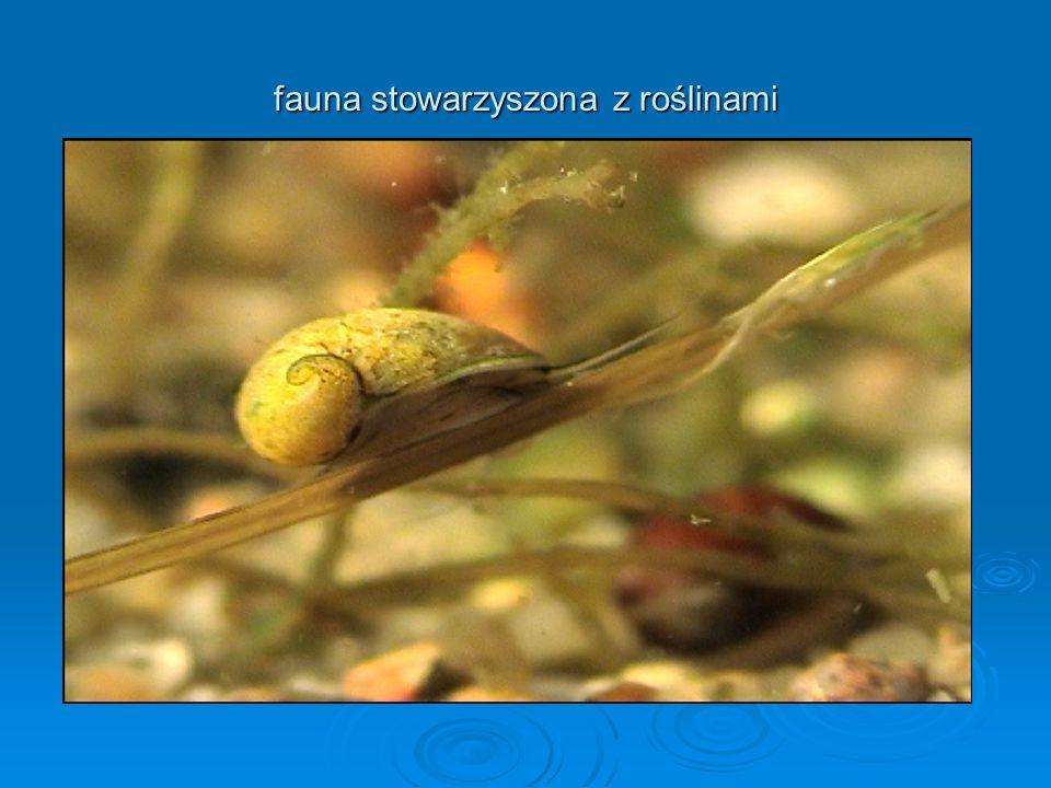 fauna stowarzyszona z roślinami