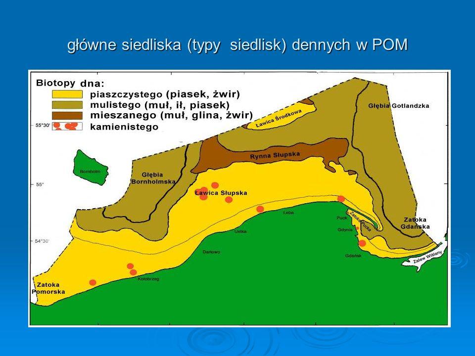 główne siedliska (typy siedlisk) dennych w POM