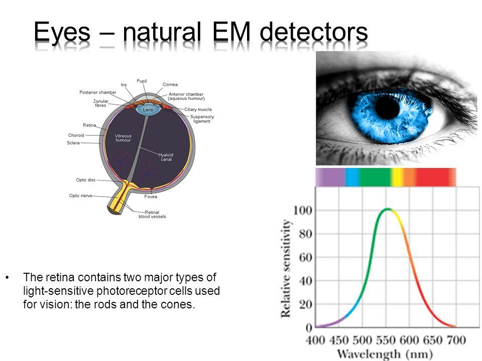 Eyes – natural EM detectors