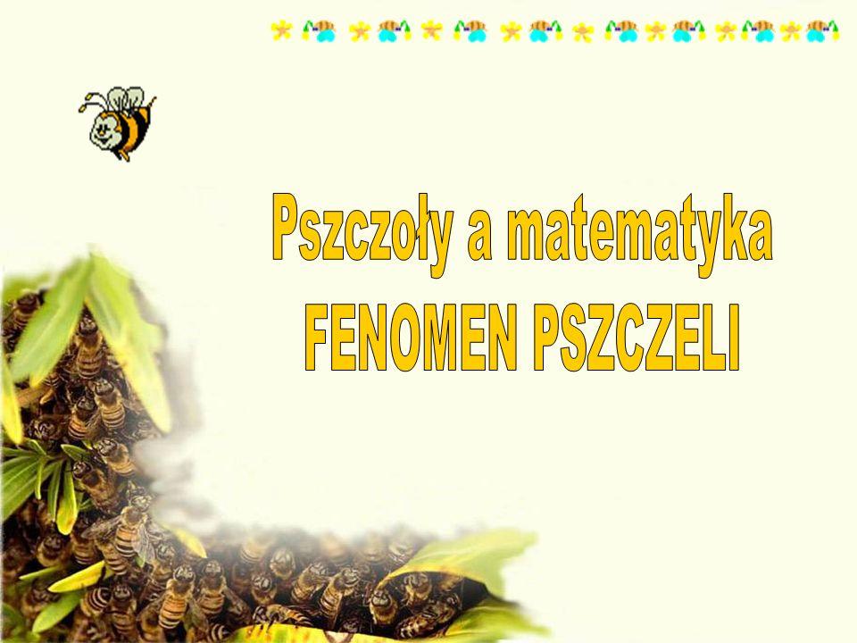 Pszczoły a matematyka FENOMEN PSZCZELI