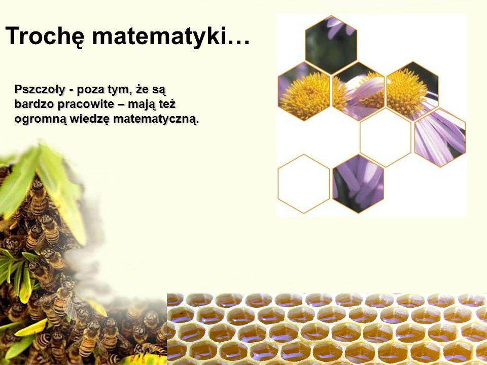 Trochę matematyki… Pszczoły - poza tym, że są bardzo pracowite – mają też ogromną wiedzę matematyczną.