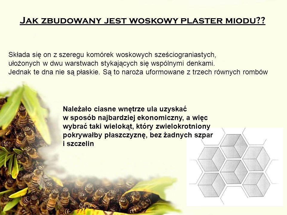 Jak zbudowany jest woskowy plaster miodu