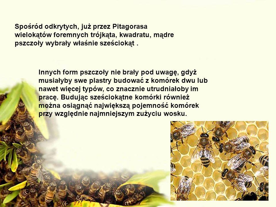 Spośród odkrytych, już przez Pitagorasa wielokątów foremnych trójkąta, kwadratu, mądre pszczoły wybrały właśnie sześciokąt .