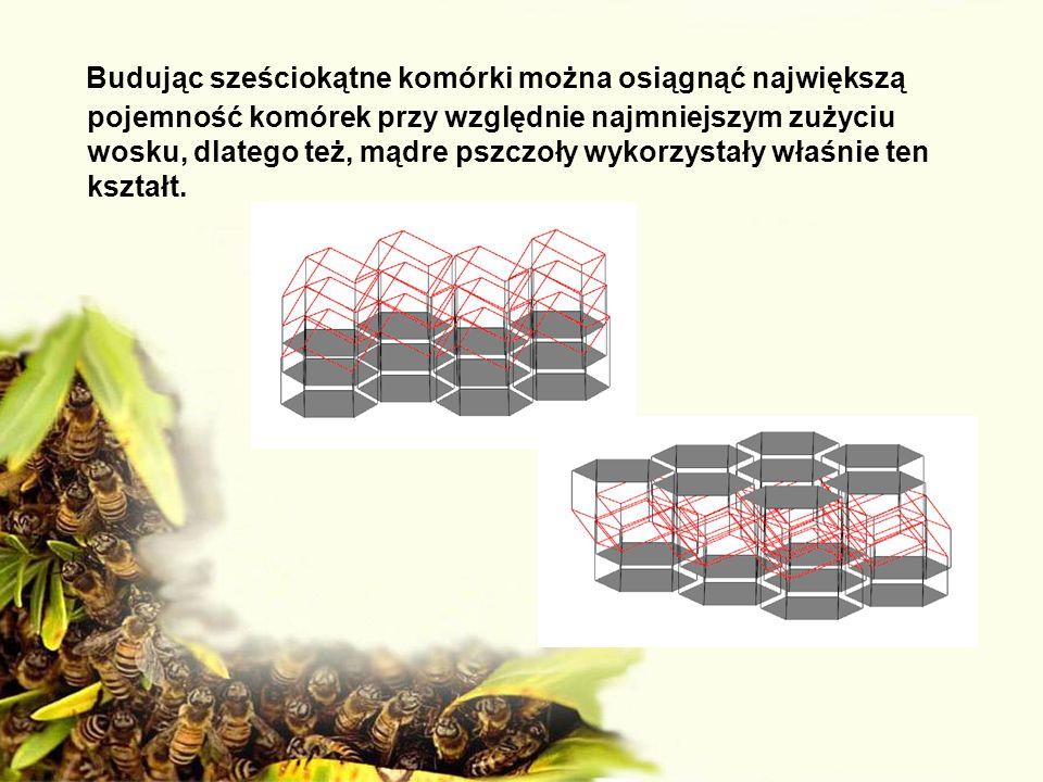 Budując sześciokątne komórki można osiągnąć największą pojemność komórek przy względnie najmniejszym zużyciu wosku, dlatego też, mądre pszczoły wykorzystały właśnie ten kształt.