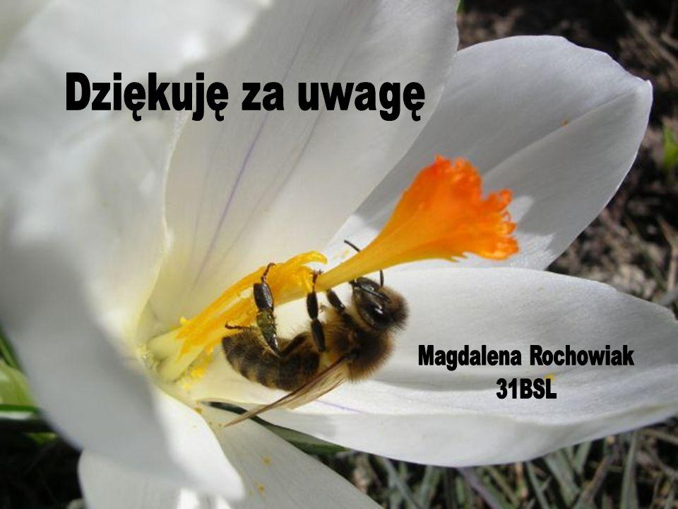 Dziękuję za uwagę Magdalena Rochowiak 31BSL