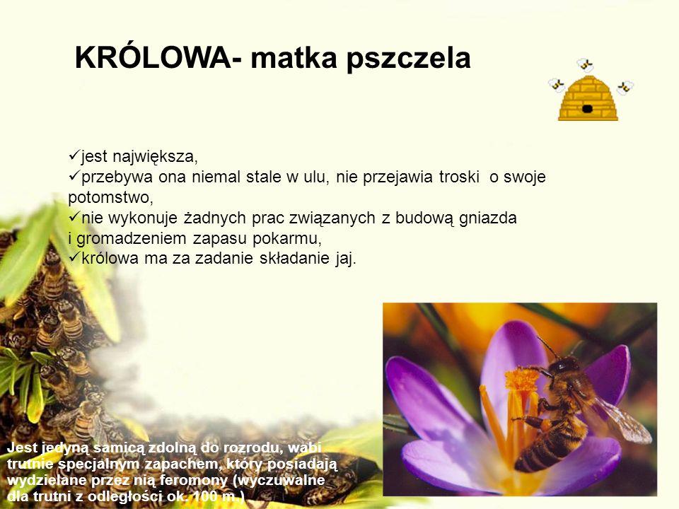 KRÓLOWA- matka pszczela