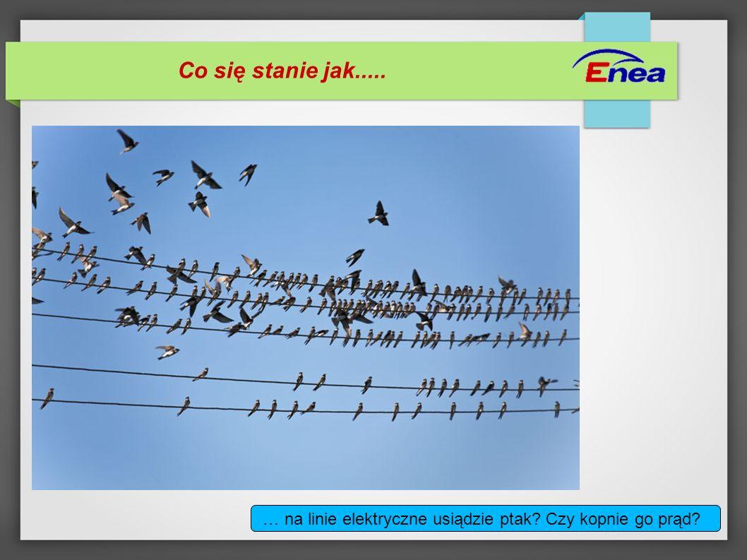 Co się stanie jak..... … na linie elektryczne usiądzie ptak Czy kopnie go prąd