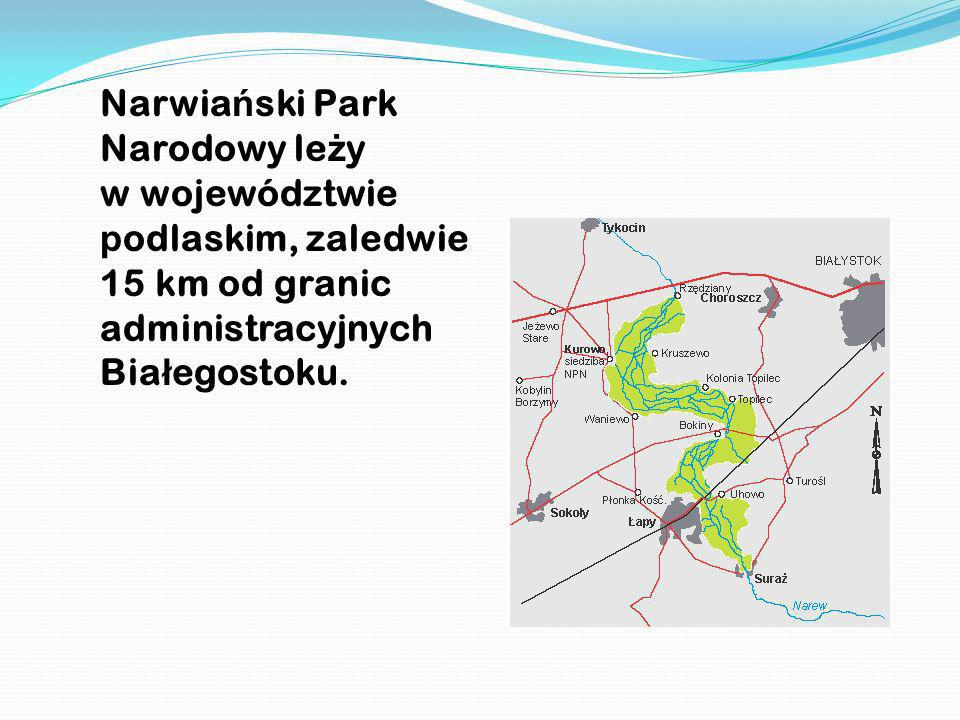 Narwiański Park Narodowy leży w województwie podlaskim, zaledwie 15 km od granic administracyjnych Białegostoku.