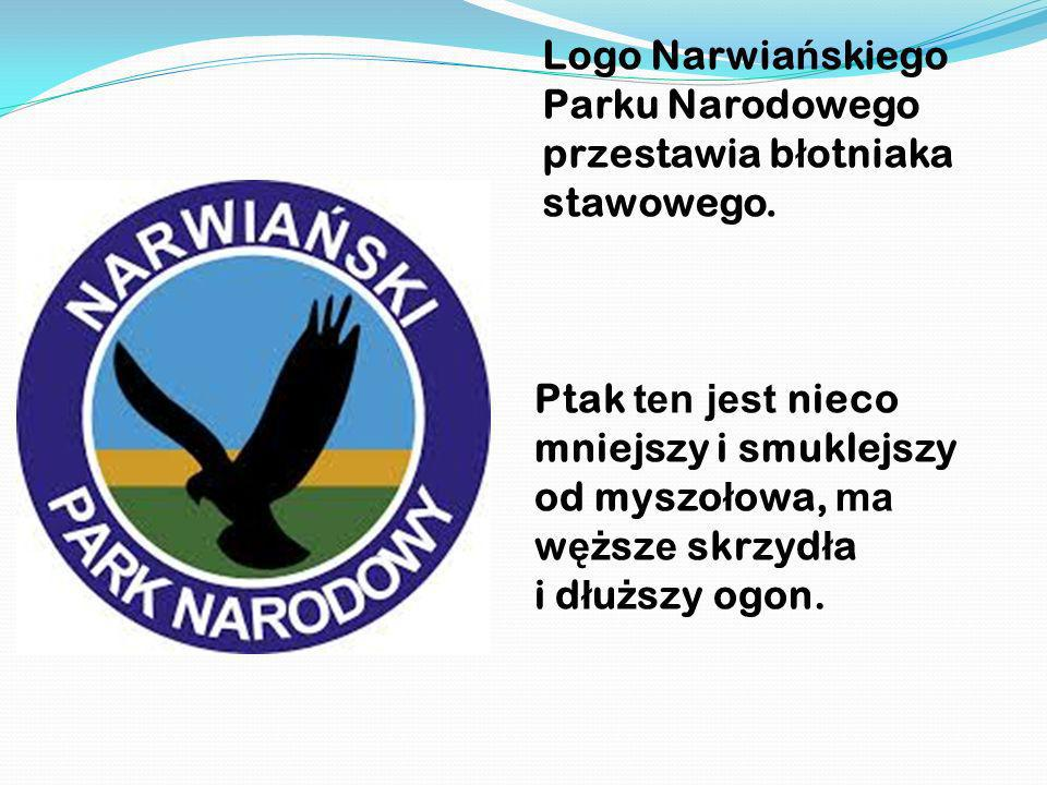 Logo Narwiańskiego Parku Narodowego przestawia błotniaka stawowego.