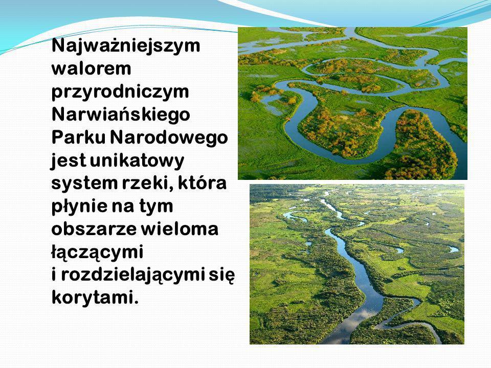 Najważniejszym walorem przyrodniczym Narwiańskiego Parku Narodowego jest unikatowy system rzeki, która płynie na tym obszarze wieloma łączącymi i rozdzielającymi się korytami.