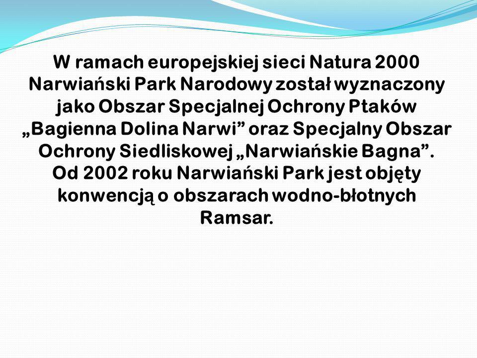 """W ramach europejskiej sieci Natura 2000 Narwiański Park Narodowy został wyznaczony jako Obszar Specjalnej Ochrony Ptaków """"Bagienna Dolina Narwi oraz Specjalny Obszar Ochrony Siedliskowej """"Narwiańskie Bagna ."""