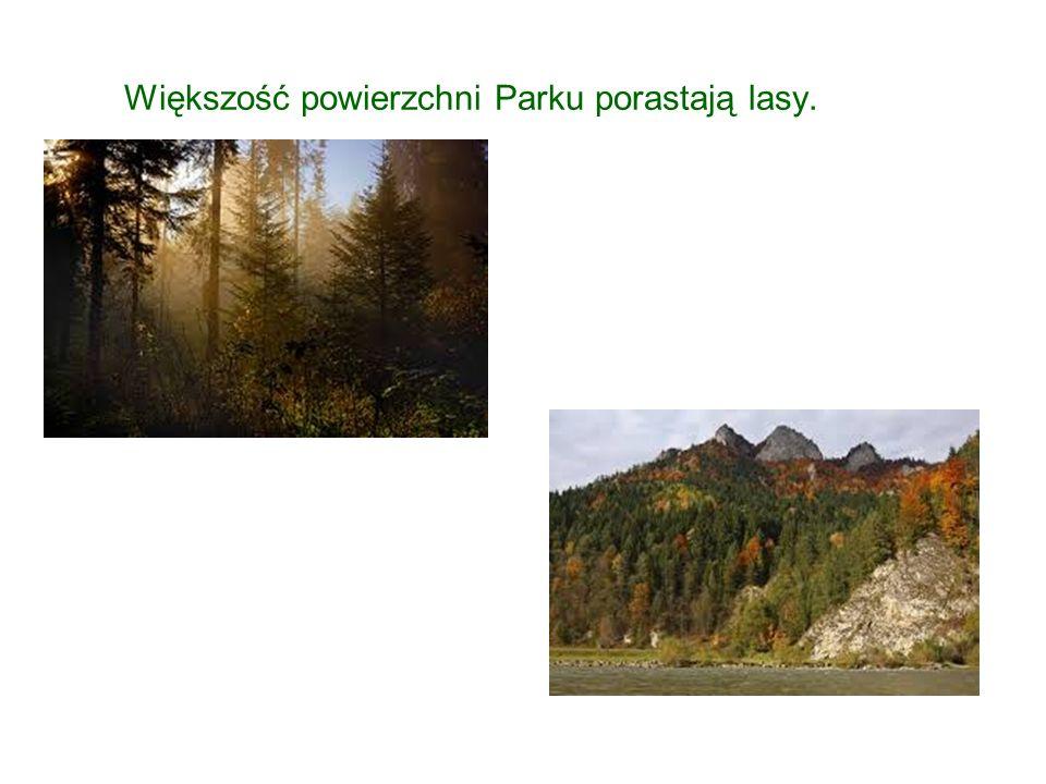 Większość powierzchni Parku porastają lasy.