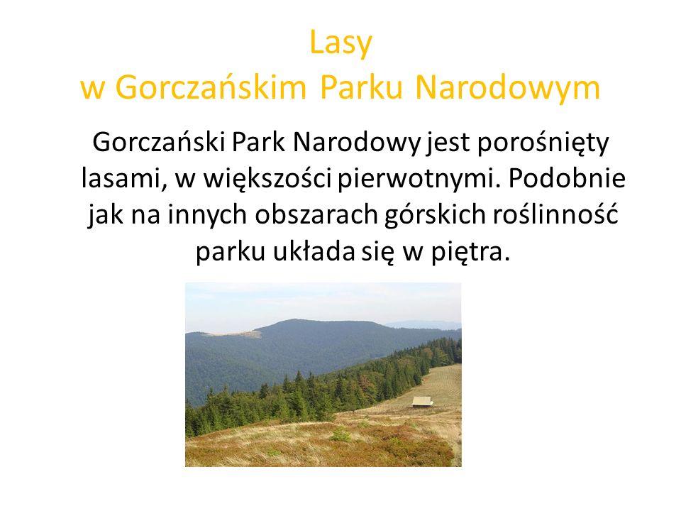 Lasy w Gorczańskim Parku Narodowym