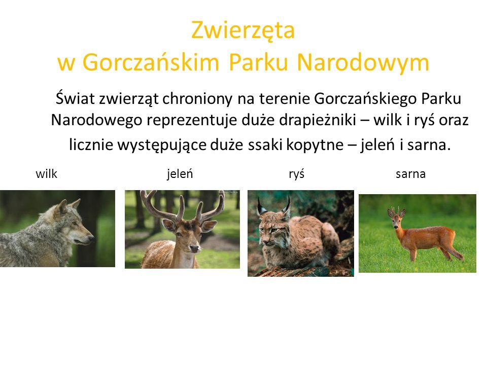 Zwierzęta w Gorczańskim Parku Narodowym