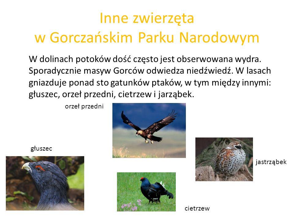 Inne zwierzęta w Gorczańskim Parku Narodowym