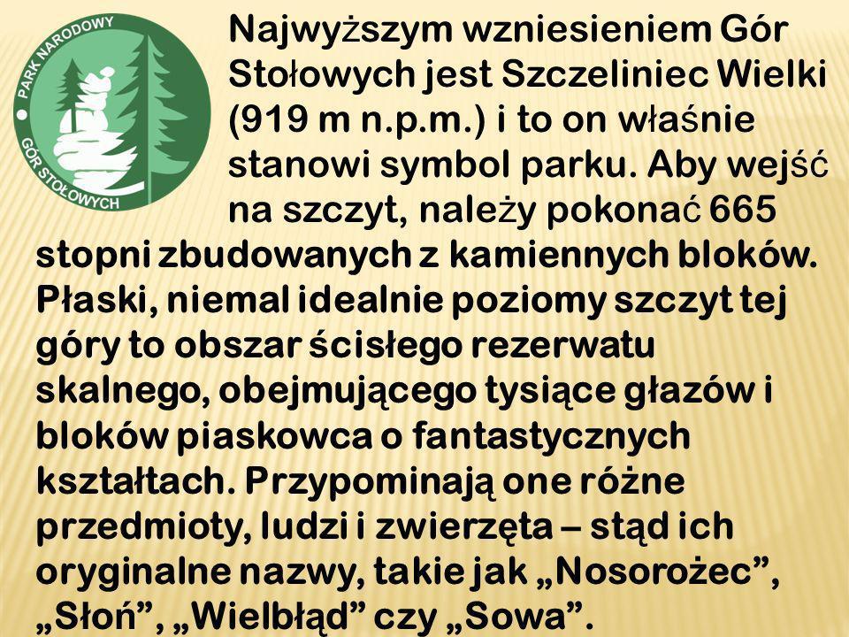 Najwyższym wzniesieniem Gór Stołowych jest Szczeliniec Wielki (919 m n