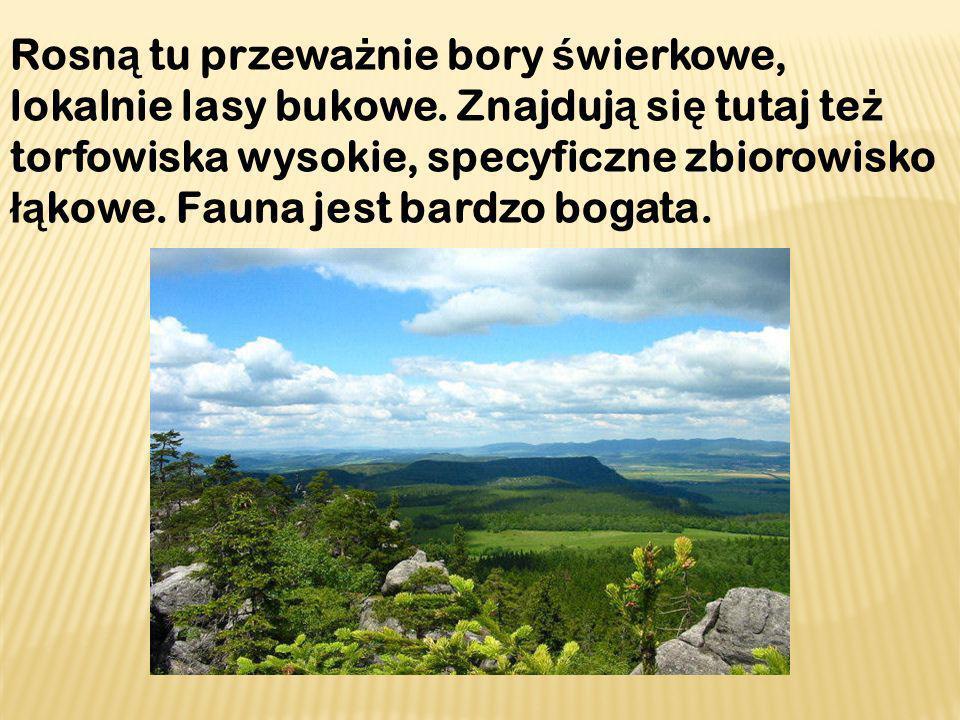 Rosną tu przeważnie bory świerkowe, lokalnie lasy bukowe