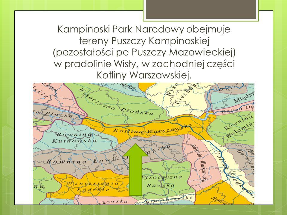 Kampinoski Park Narodowy obejmuje tereny Puszczy Kampinoskiej (pozostałości po Puszczy Mazowieckiej) w pradolinie Wisły, w zachodniej części Kotliny Warszawskiej.