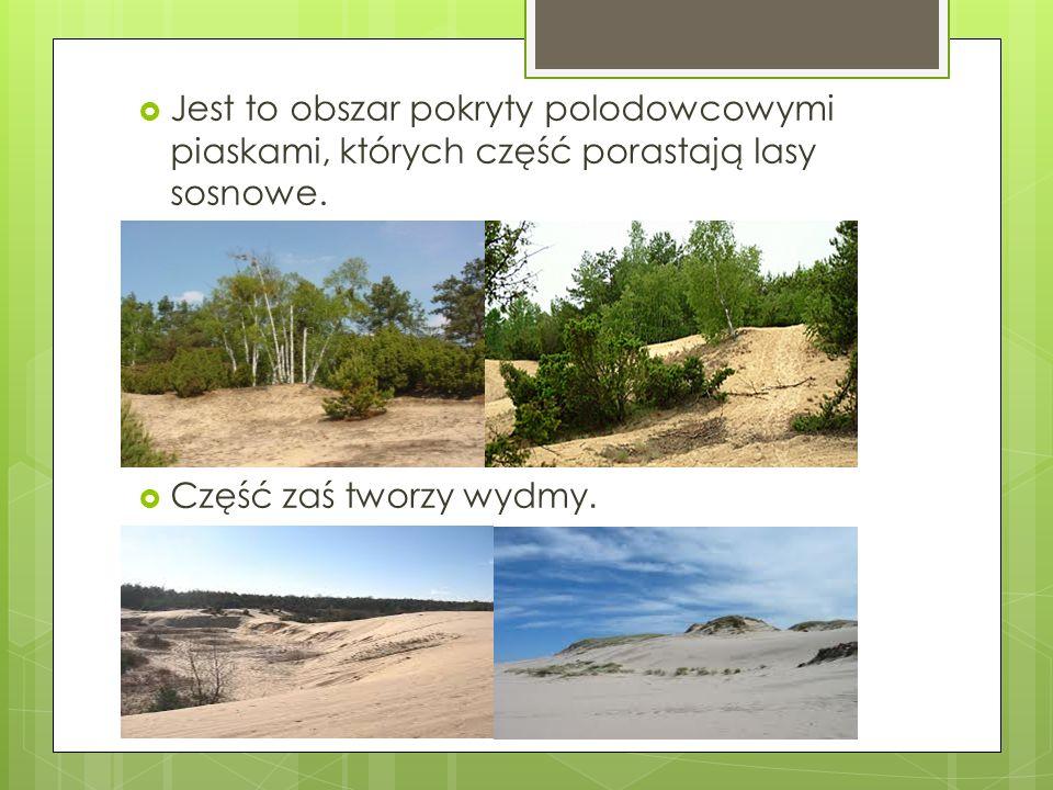 Jest to obszar pokryty polodowcowymi piaskami, których część porastają lasy sosnowe.