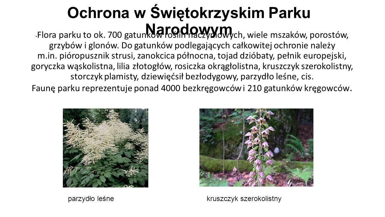 Ochrona w Świętokrzyskim Parku Narodowym