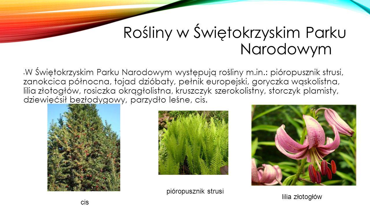Rośliny w Świętokrzyskim Parku Narodowymm
