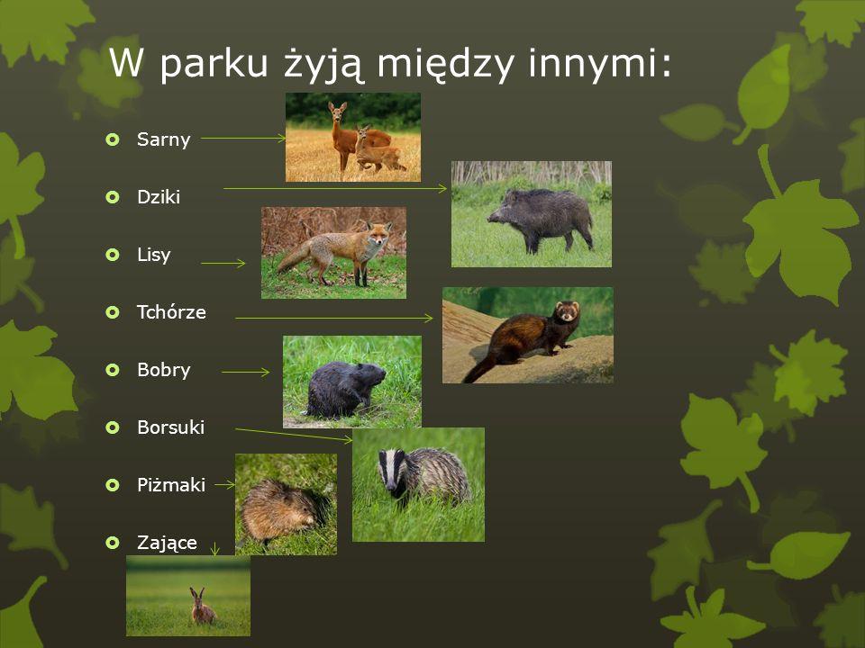 W parku żyją między innymi: