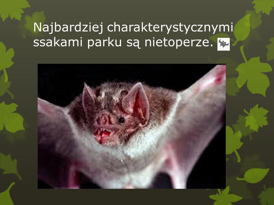 Najbardziej charakterystycznymi ssakami parku są nietoperze.