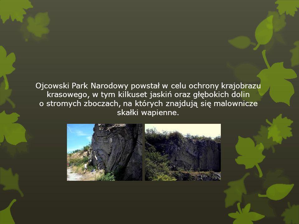Ojcowski Park Narodowy powstał w celu ochrony krajobrazu krasowego, w tym kilkuset jaskiń oraz głębokich dolin o stromych zboczach, na których znajdują się malownicze skałki wapienne.