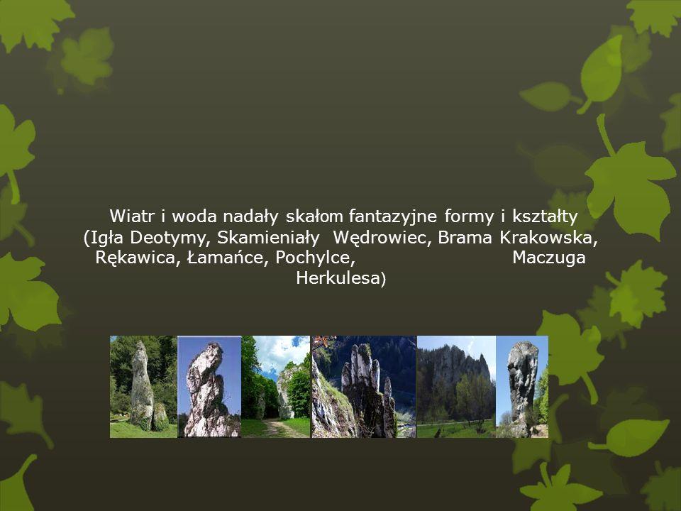Wiatr i woda nadały skałom fantazyjne formy i kształty (Igła Deotymy, Skamieniały Wędrowiec, Brama Krakowska, Rękawica, Łamańce, Pochylce, Maczuga Herkulesa)