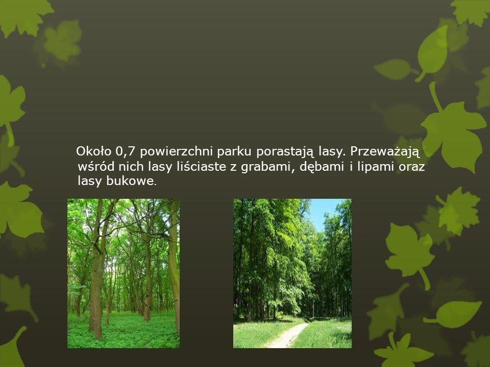 Około 0,7 powierzchni parku porastają lasy