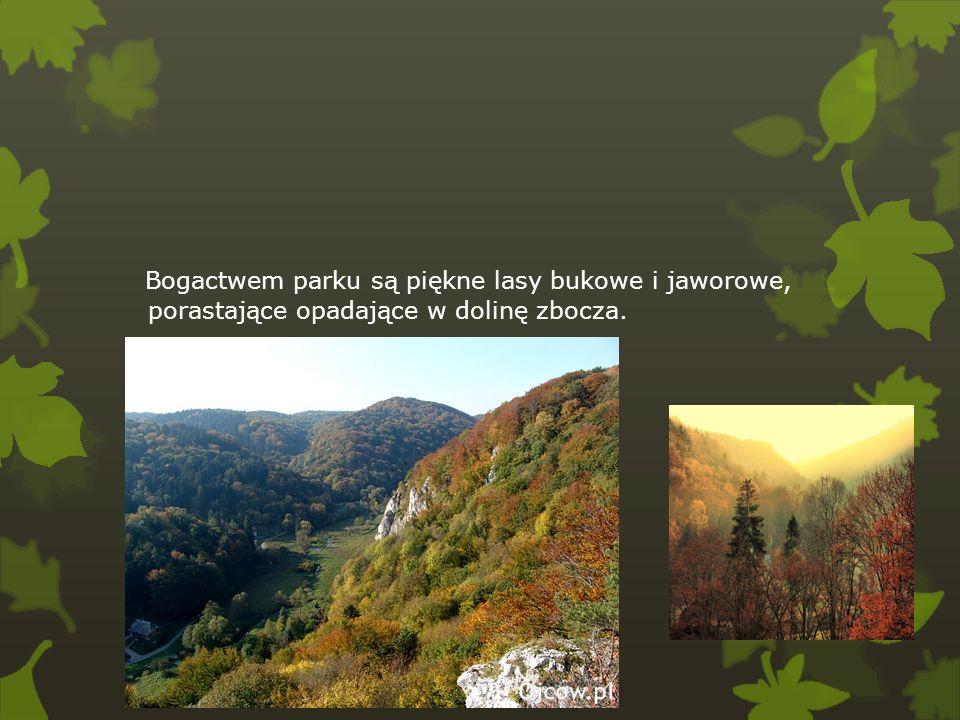 Bogactwem parku są piękne lasy bukowe i jaworowe, porastające opadające w dolinę zbocza.