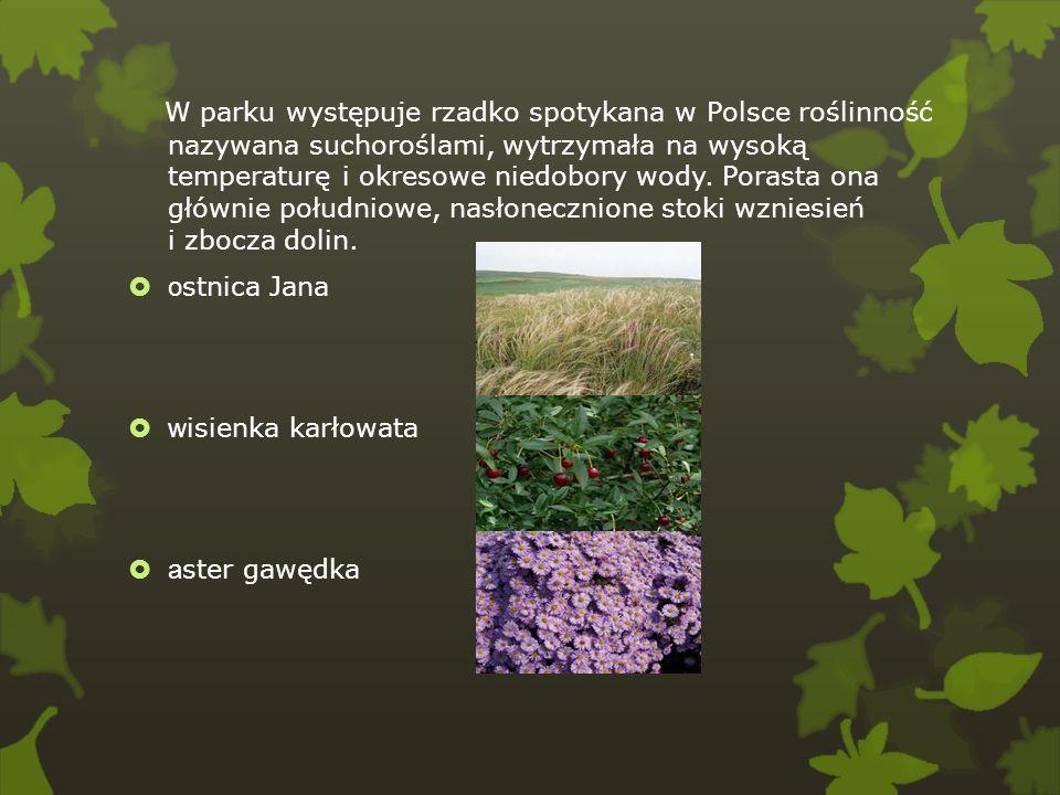 W parku występuje rzadko spotykana w Polsce roślinność nazywana suchoroślami, wytrzymała na wysoką temperaturę i okresowe niedobory wody. Porasta ona głównie południowe, nasłonecznione stoki wzniesień i zbocza dolin.