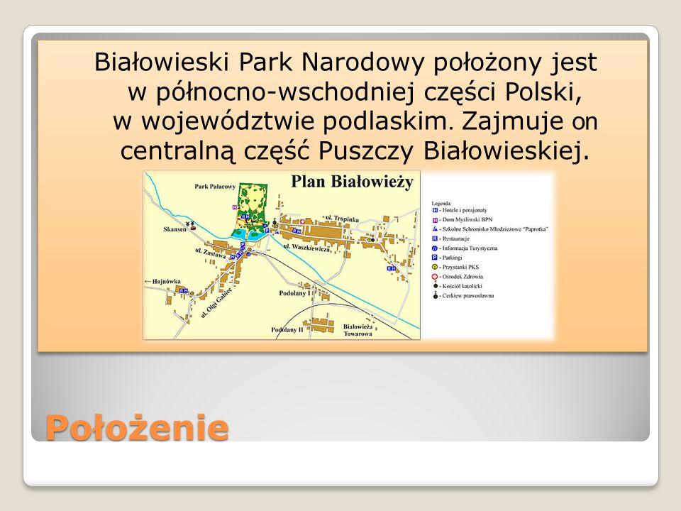Białowieski Park Narodowy położony jest w północno-wschodniej części Polski, w województwie podlaskim. Zajmuje on centralną część Puszczy Białowieskiej.