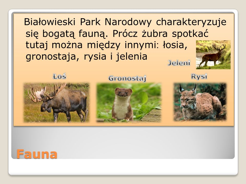Białowieski Park Narodowy charakteryzuje się bogatą fauną