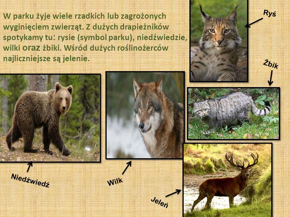 W parku żyje wiele rzadkich lub zagrożonych wyginięciem zwierząt