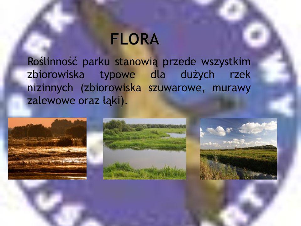 Flora Roślinność parku stanowią przede wszystkim zbiorowiska typowe dla dużych rzek nizinnych (zbiorowiska szuwarowe, murawy zalewowe oraz łąki).