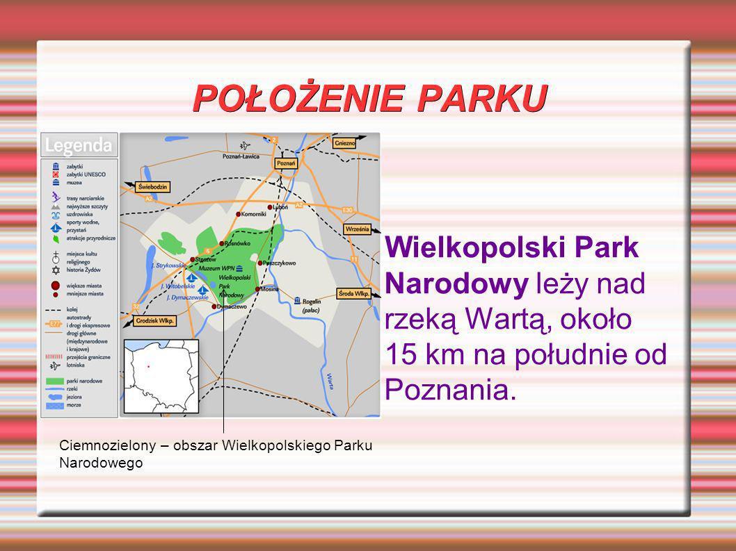 POŁOŻENIE PARKU Wielkopolski Park Narodowy leży nad rzeką Wartą, około 15 km na południe od Poznania.