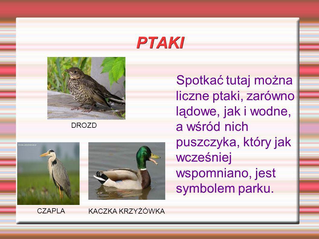 PTAKI Spotkać tutaj można liczne ptaki, zarówno lądowe, jak i wodne, a wśród nich puszczyka, który jak wcześniej wspomniano, jest symbolem parku.