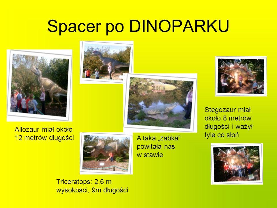 Spacer po DINOPARKU Stegozaur miał około 8 metrów długości i ważył tyle co słoń. Allozaur miał około 12 metrów długości.