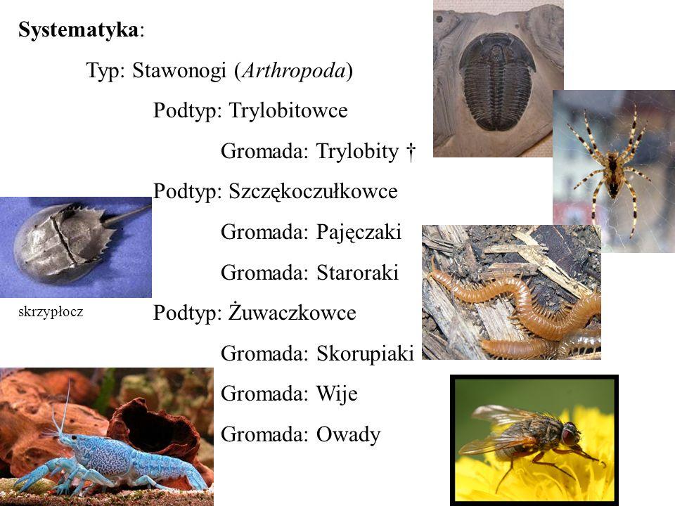 Typ: Stawonogi (Arthropoda) Podtyp: Trylobitowce Gromada: Trylobity †