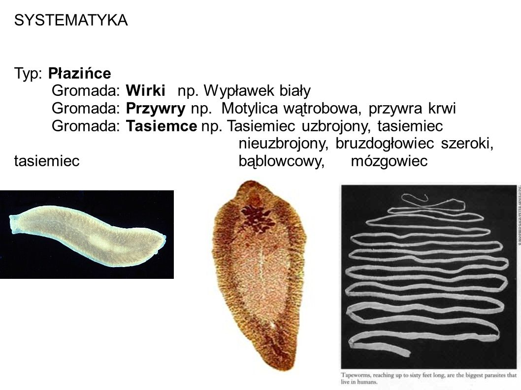SYSTEMATYKA Typ: Płazińce. Gromada: Wirki np. Wypławek biały. Gromada: Przywry np. Motylica wątrobowa, przywra krwi.
