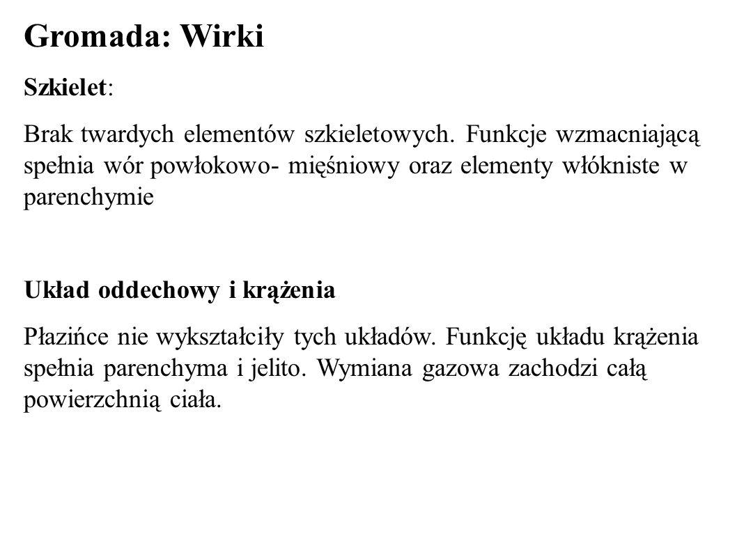Gromada: Wirki Szkielet:
