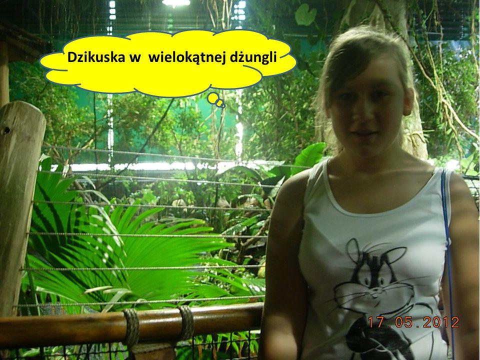 Dzikuska w wielokątnej dżungli