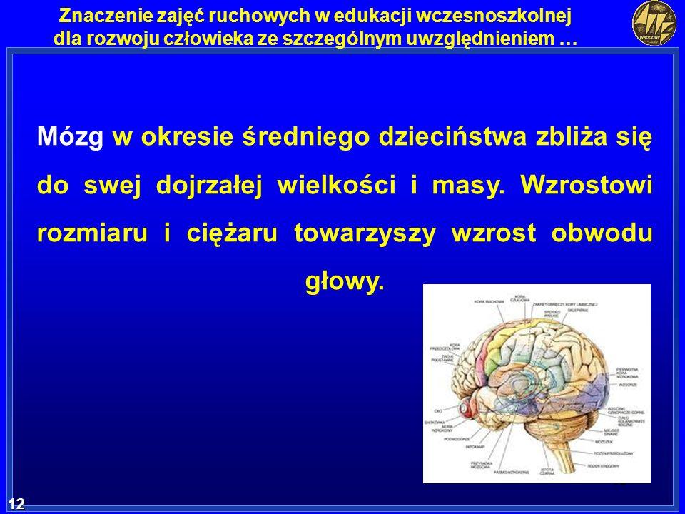 Mózg w okresie średniego dzieciństwa zbliża się do swej dojrzałej wielkości i masy.