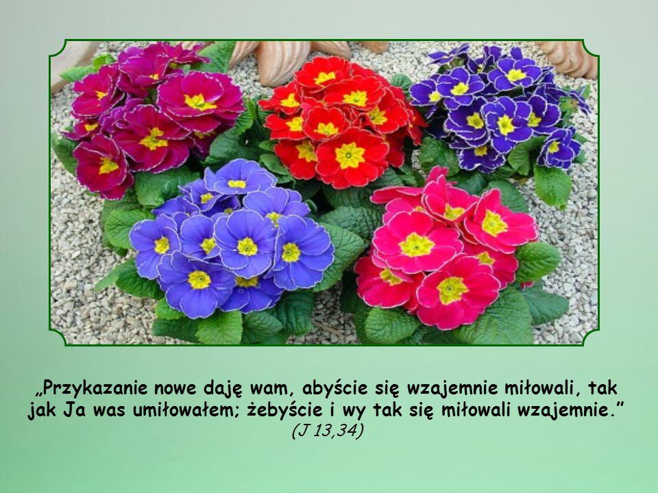 """""""Przykazanie nowe daję wam, abyście się wzajemnie miłowali, tak jak Ja was umiłowałem; żebyście i wy tak się miłowali wzajemnie. (J 13,34)"""