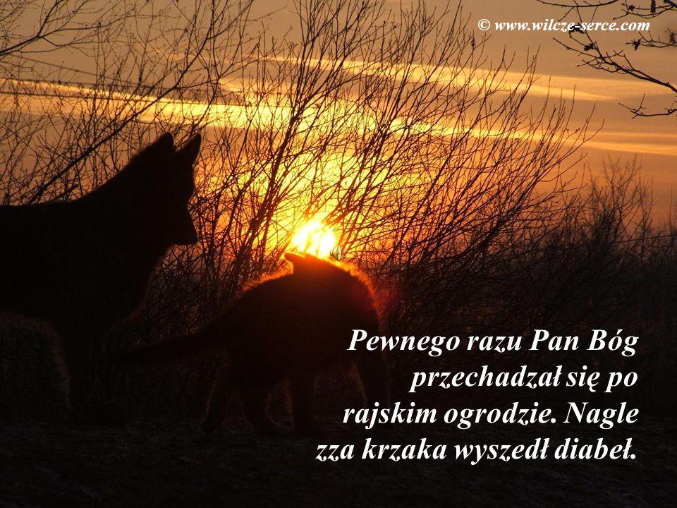 © www.wilcze-serce.com Pewnego razu Pan Bóg przechadzał się po rajskim ogrodzie.