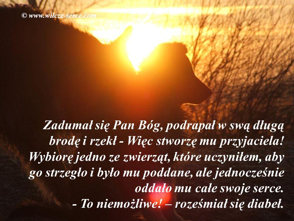 © www.wilcze-serce.com